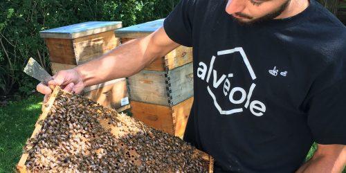 atelier-apiculture
